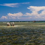 Honduras - Bay Islands Fly Fishing : Fly Fishing Roatan & Guanaja - The Bay Islands of Honduras