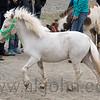 stallion_parade_019
