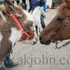 stallion_parade_038
