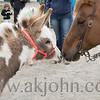 stallion_parade_026