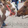 stallion_parade_036