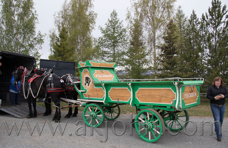 stallion_parade_001
