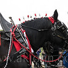 stallion_parade_005