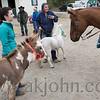 stallion_parade_023