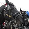 stallion_parade_007