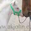 stallion_parade_021