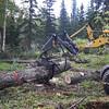EATA TREE CLEARING
