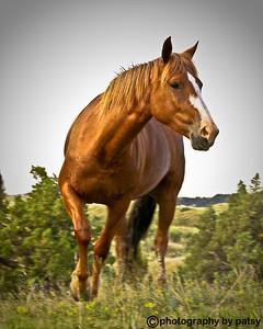 WILD HORSE THE BADLANDS - NORTH DAKOTA