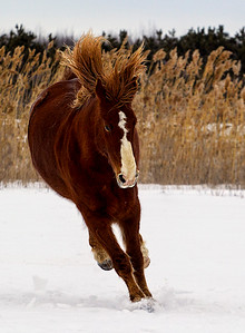 st-amable horses-160227-FFF-1323
