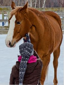 st-amable horses-d7000-160227-DSC_1810