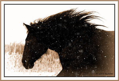 st-amable horses-160227-FFF-1263-bw-opalotype-snow-merged-framed