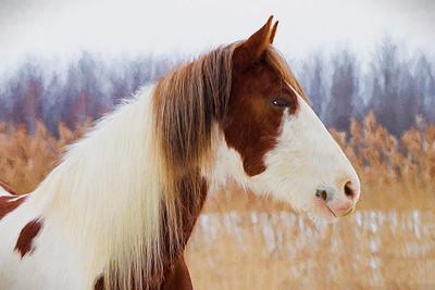 st-amable horses-160227-FFF-1165-liquidlines III
