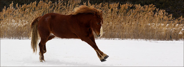 st-amable horses-160227-FFF-1319