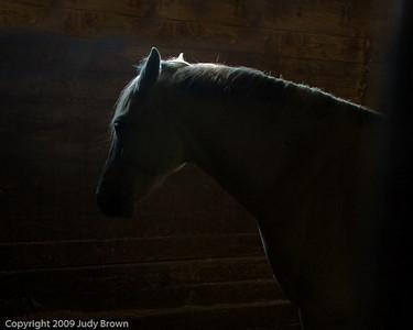 horseprofile2_8734_copy