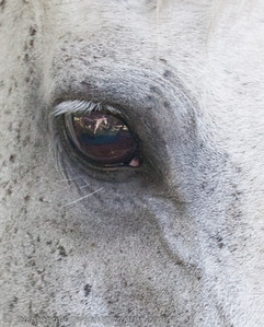 Note the horse in his eye.   Angel??