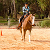 """WAPHA Western Australia Paint Horse Assoc, """"A"""" Show held in May 2016. Great turnout"""