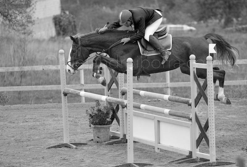 HORSES #007