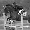 HORSES #003