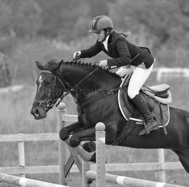 HORSES #008