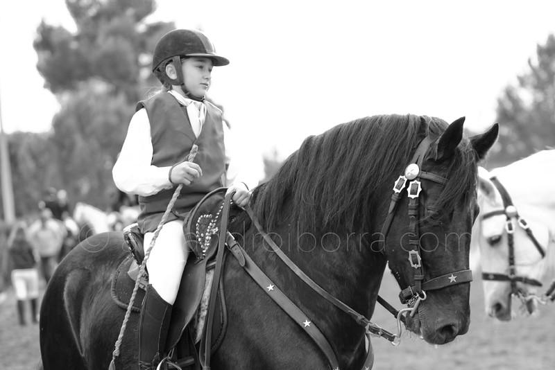 HORSES #009