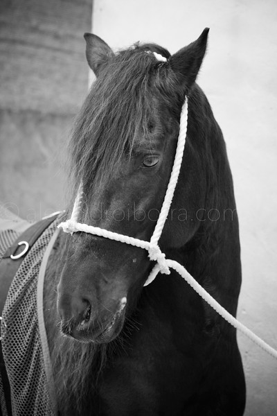 HORSES #001