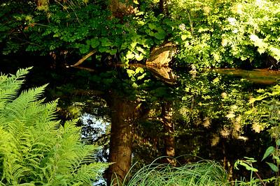 Lázeňský park v Karlově Studánce