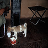 Aid Station Dog LZ Bronc0