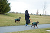 A resident walks her two pets near Ruddy Duck and Heritage Shores Circle