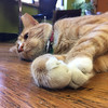 Photo taken by CampPurrs student in 2016 Summer CampPurrs Photography class at Tiny Lions cat cafe - age 12-17 session
