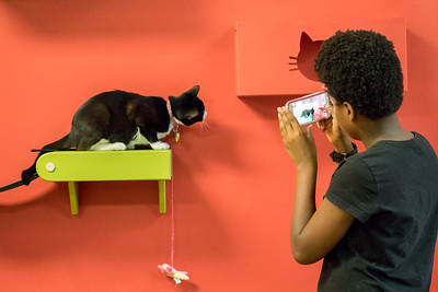 This photo was taken by professional photographer Anne Savage in the summer of 2017 at the Tiny Lions lounge and adoption Center during the CampPurrs photography classes for youth