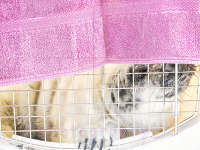 seal pup pick up-3
