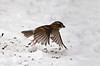 SPARROW TAKE OFF