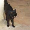 Cat of Basilica Francisco Asis Menor