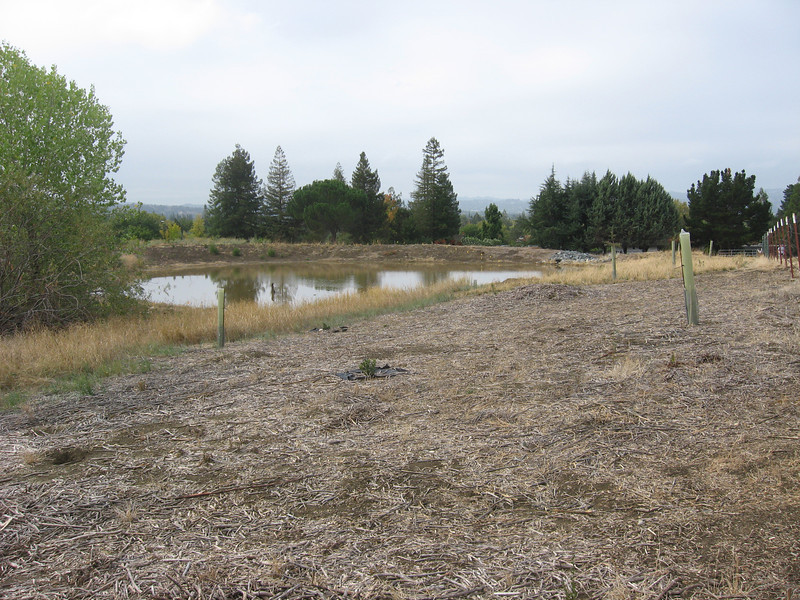 Area where grass seedlings and chaparral species will be planted this winter.
