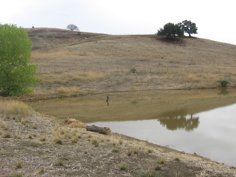 View from the gate towards the cottonwood tree.  The dark bush near the right side marks the high water line.