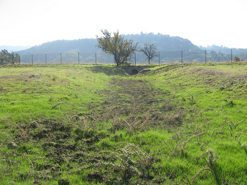 This drainage was apparently engineered because the land looked graded and there was sacrete to stabilize the channel bank between the oak tree and the culvert beyond it.  Note the large thistles in the channel.