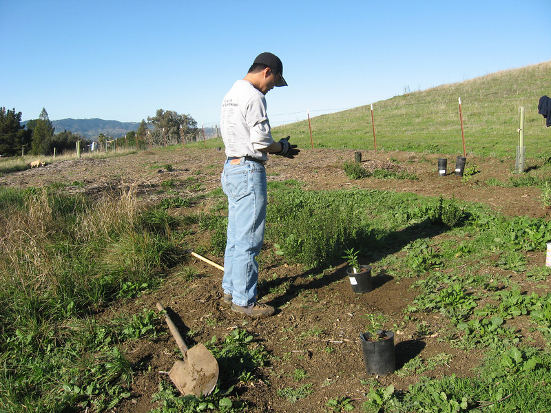 After clearing the area of weeds, Glenn prepares to plant a black sage.