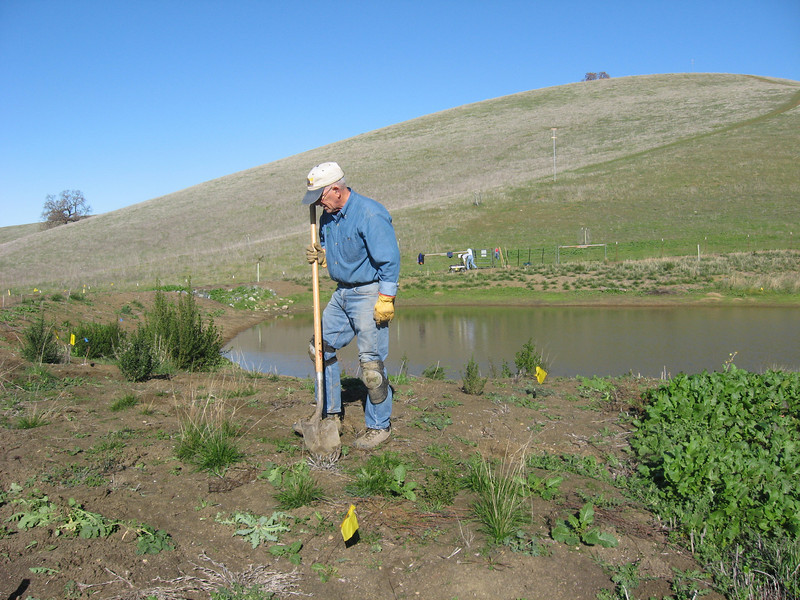 Joe laid out an improved route for the path a couple of months ago, but unfortunately we lost it when we weeded.  This morning he marked it again.  Then we discovered some lupine in the new route.  Here Joe is contemplating how to separate path and lupine.