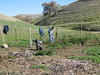 Glenn uses a rake to plant ceanothus seeds.