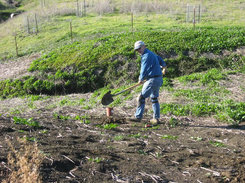 Joe plants a toyon low on the dam.