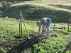 Bill also plants a black sage first.