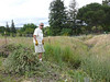 David whacked the thistles where it was too steep for the weed eater.