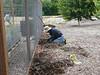 First we scraped away the mulch.
