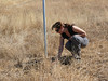 Kathryn White, County Agriculture Department biologist, checks under one of the raptor poles for signs of use.
