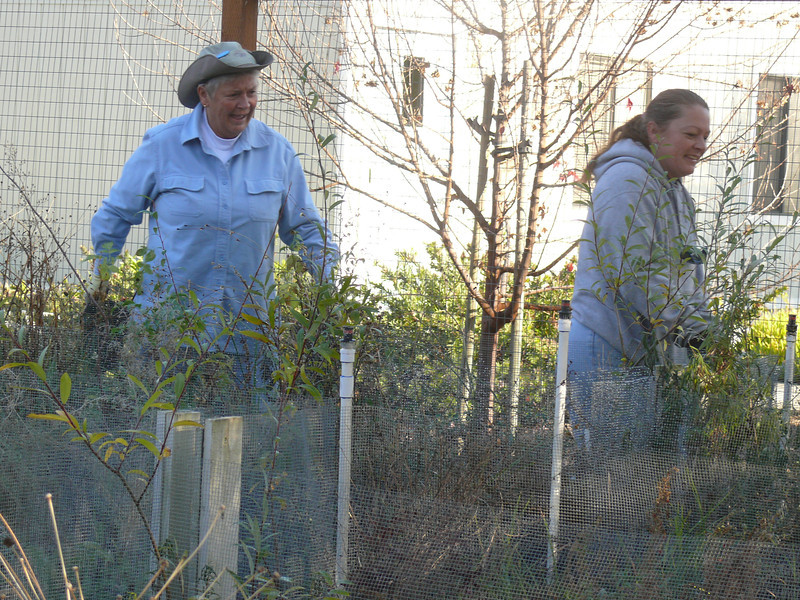 Hollie and Bev began by moving plants.
