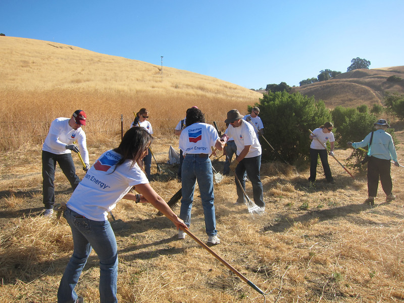 Work has just gotten under way. We began by raking the weeds into rows with leaf rakes. (Photo by Lisa Yee.)