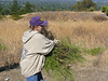Karen carries the pulled weeds to a secluded spot among the coyote brushes.