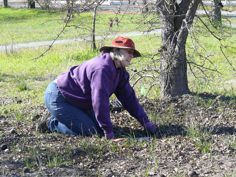 Linda planted melica among the blue-eyed grass where it would be shaded by the oak tree.
