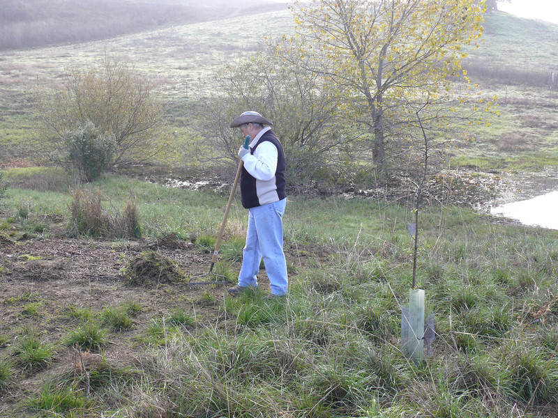 Preparing to interplant native grass in the second-year patch