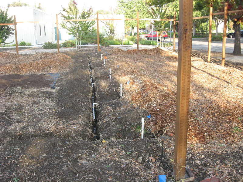 In this early view, we have surveyed and roughly leveled the ground, sunk the fence posts and stabilized them with temporary stringers, put in the main line irrigation, and moved chips inside before the fence got in the way.